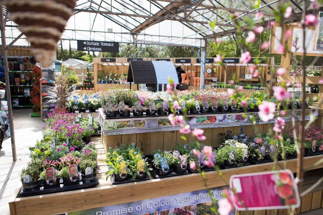 Garden Centre: Cannon Hall Garden Centre & Thyme Bistro
